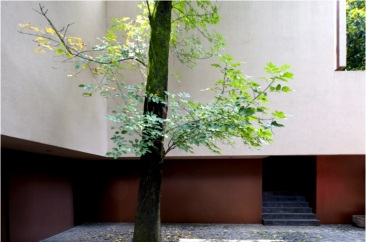 Detalle de árbol en Casa Hidalgo 48. 1994